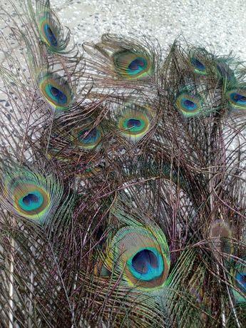 Паунови пера