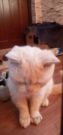 Котята бесплатыние