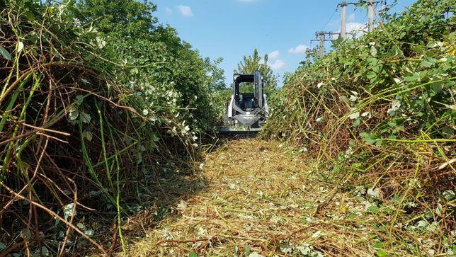 Defrisare cosire taiere curatare iarba arbusti maracini rugi