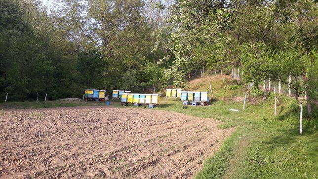 De vînzare familii de albine 20 de familii cu lăzi