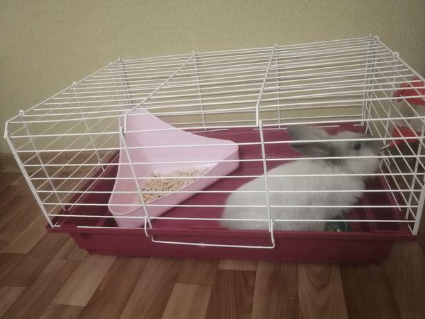 Продам декаративного кролика