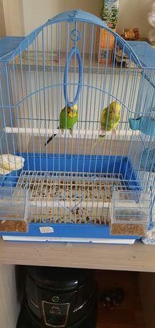 Продаётся волнистые попугаи