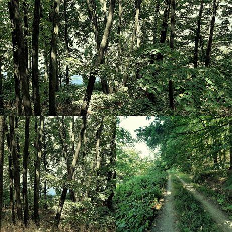 Padure teren forestier-5000mp Balta Tararu/ Liziera de Lac Frumusani