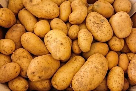 Картоф сорт сорая