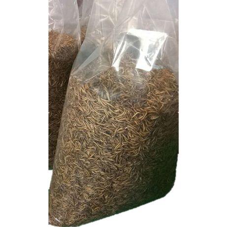 Сушен брашнен червей 1л/300гр (един литър)