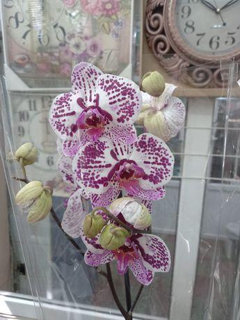 Распродажа! Орхидея, растения, цветы, орхидеи