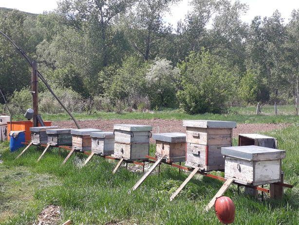 Продам пчел и весь инвентарь