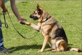 Dresaj canin