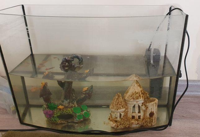 Аквариум с 2 рыбками