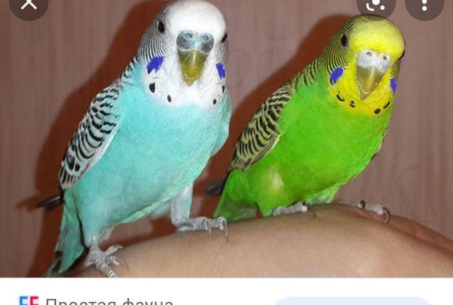 Продажа попугаев
