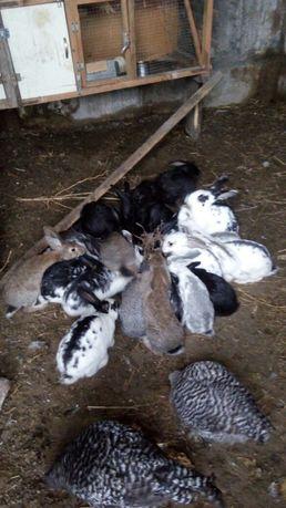 Продам кроличат 2 месяц  районе восточной 4дачи левый