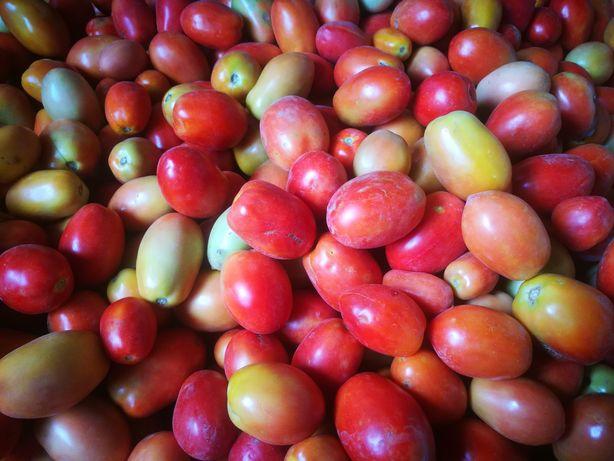 Продаю помидоры сорт НОВИЧОК в Талгаре