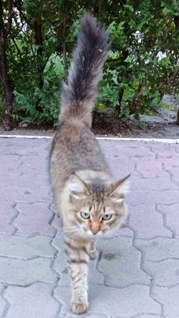 Кошка ищет дом!!