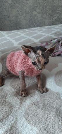 Продам котенка последний Канадского Сфинкса