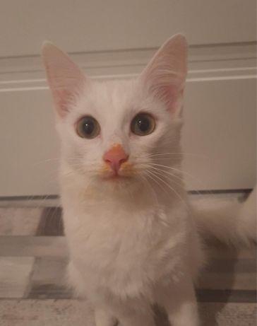 Бесплатно отдам кошку возраст 5-6 месяцев