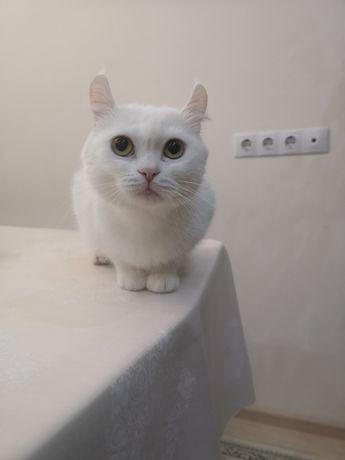Ищем кота для вязки