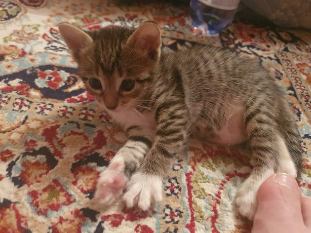 Отдам кошек Хорошие  руки