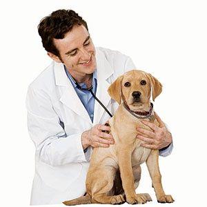 """Ветеринар.Ветеринарная клиника """"МАМЫР"""""""