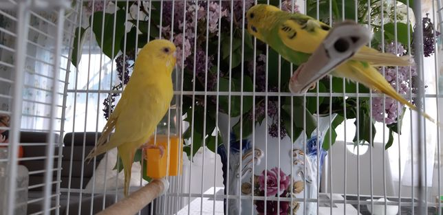 Papagali multicolori deosebiti