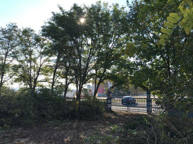 Curățare cosire defrisare terenuri iarba -arbusti-copaci-ambrozie