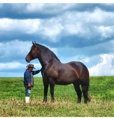 Лошади кони откормленые конина мясо соғым казы семіз жылқы ет жылқылар