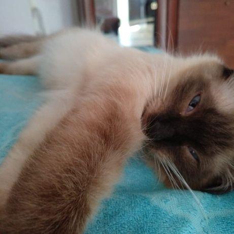 Потерялась кошка. Кличка Масяня.