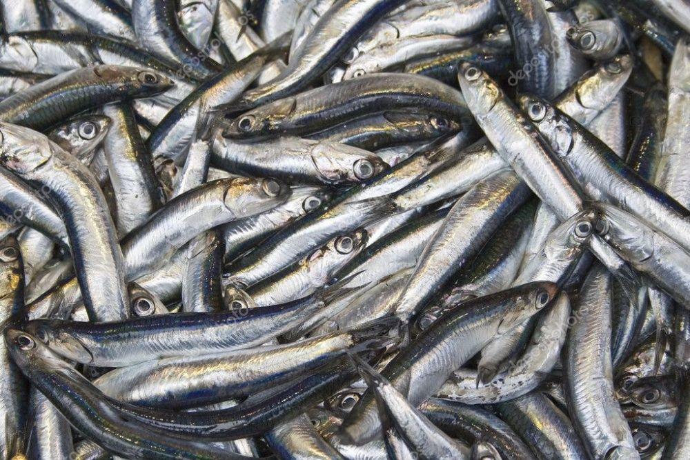 хамса, черноморская рыба Алматы - изображение 1