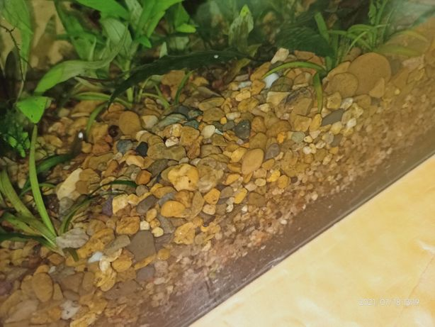 45 кг грунта аквариумного за 6000