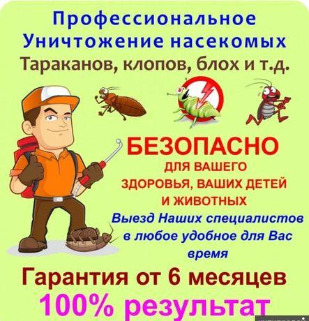 Дезинфекция, Дезинсекция от тараканов и клопов