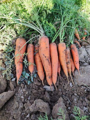 Морковь по 130тенге за 1кг