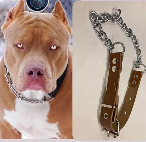Каишка за куче от естествена кожа и синджир /нашийник/