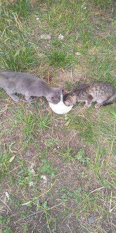 Котята весенние заберите скоро зима