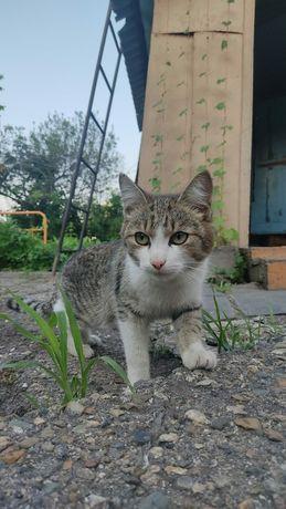 Котейка ищет своих мампап