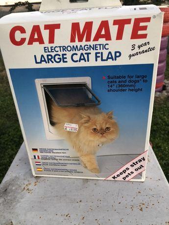 Usita pisicute