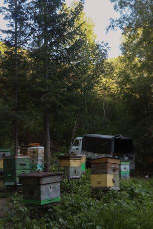 Свежий мёд Разнотравье(Лесной)