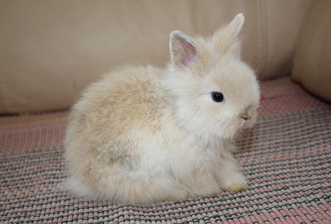 Кролики, большими не вырастают