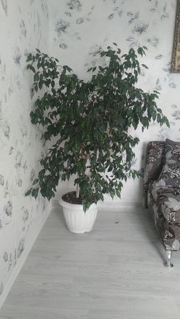 Продам комнатные растения