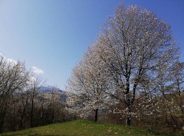 Teren Ceahlau (DURAU) langa Lacul Bicaz (Izvorul Muntelui)