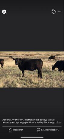 Продам сельскохозяйственное ТОО