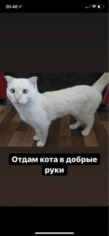 Кот! отдам бесплатно!