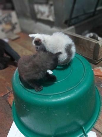 Кошкиживотныекошки