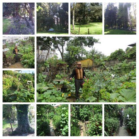 Amenajări exterioare: grădini, curți și întrețineri spații verzi