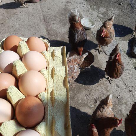 Ouă de casă. 1 leu o bucată.