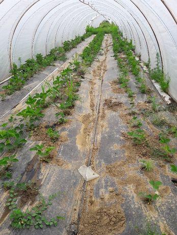 Vand solarii legume