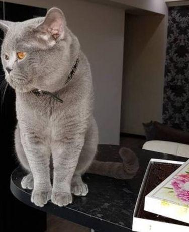 Кот с родословной графских кровей, с опытом, ждёт невет
