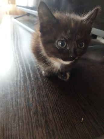 Отдам котенка 1,5мес