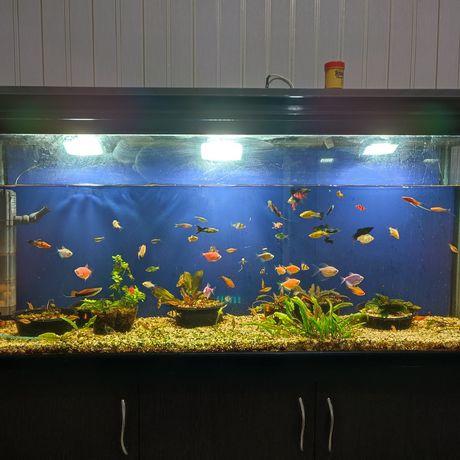 Продам аквариум на 200л