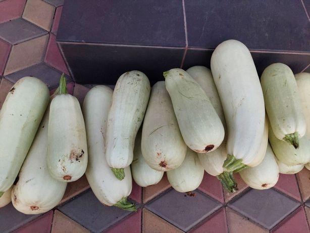 Домашние кабачки и баклажаны