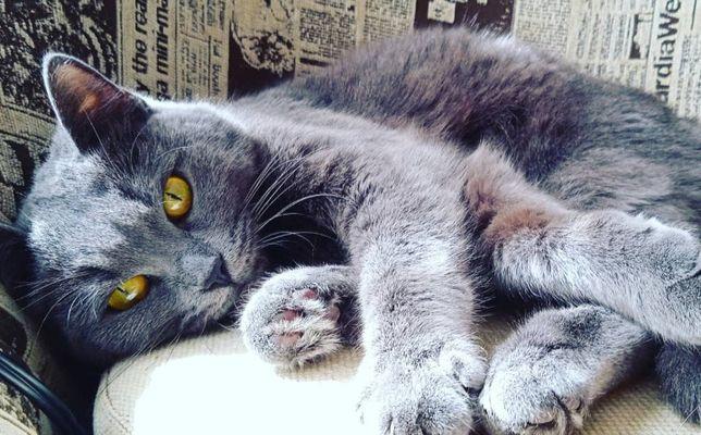 Кошка девочка...
