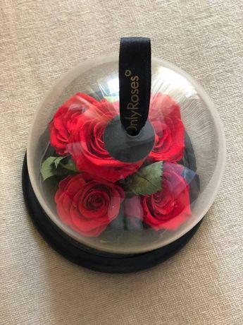 Buchet 5 trandafiri criogenati, provenienta U.K. firma Only Roses